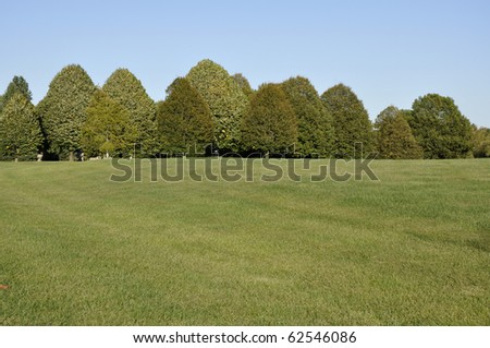 WILLOW PACK! (WOLF RP) (*NEW ACCEPTING) Stock-photo-large-grass-area-with-a-row-of-many-trees-in-the-background-above-is-a-bright-blue-sky-62546086