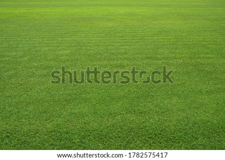 Photo of  Large green lawn. Very Clean Lawn, Grass texture background. Grass surface for product display arrangement. Green Background, Golf Course, Vast grassland, Meadow,  courtyard, Football field.
