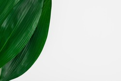 Large green leaves of a palm tree on a white background. Tropical greenery frame. Top view, copy space