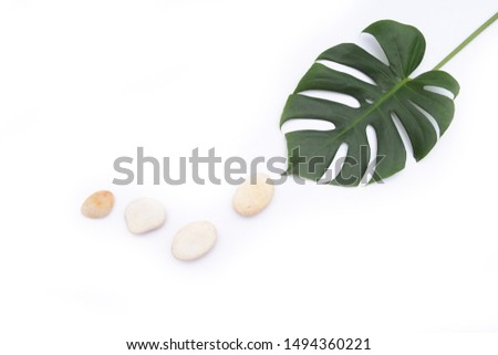 Large green monster leaves with four white stones on white background