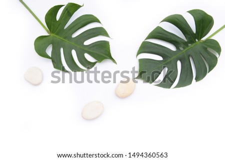 Large green monster leaves with three white stones on white background