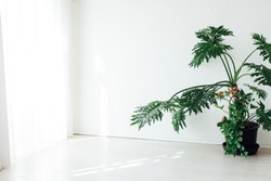 large green ornamental plant in the interior of the white office