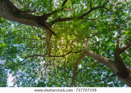 Large green shrubs with covered leaves and light pass through. #737707198