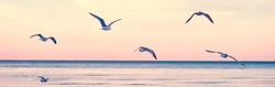 Large group flock of seagulls birds on sea lake water and flying in sky on summer sunset. Web banner header for website. Toned with retro vintage hipster warm filters. Outdoor nature fauna.