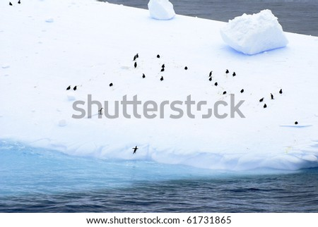 Large group of Adelie and Chin Strap Penguins on a beautiful Iceberg at Antarctica.