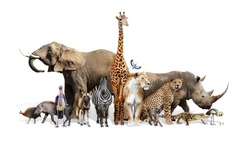 Large group of African animals together on white background