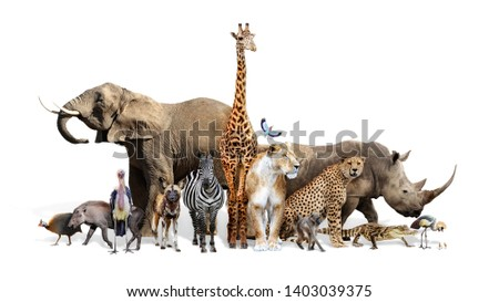 Large group of African animals together on white background #1403039375