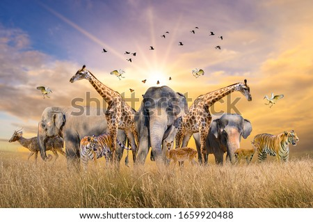 Large group of african safari animals. Wildlife conservation concept Photo stock ©