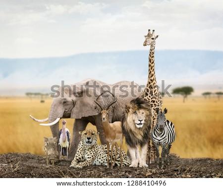 Large group of African safari wildlife animals together in Kenya grasslands