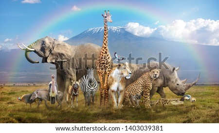 Large group of African wildlife animals in a magical bream scene with snow-capped Mt Kilimanjaro in background and rainbow overhead #1403039381