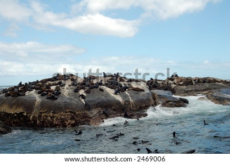 Large Group Of Animals at Hout Bay