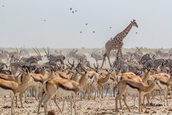 large group of animals in a waterhole in Ozonjuitji m'Bari, Etosha National Park, Namibia.