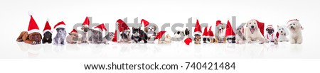 Shutterstock large group of animals waring santa claus hat on white background; dogs, cats, chinchilla, rabbits, guinea pigs