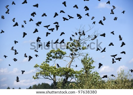 Large group of birds in the sky