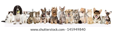 Large group of cats and dogs in front view. isolated on white background