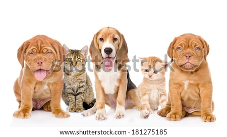 large group of cats and dogs sitting in front. isolated on white background