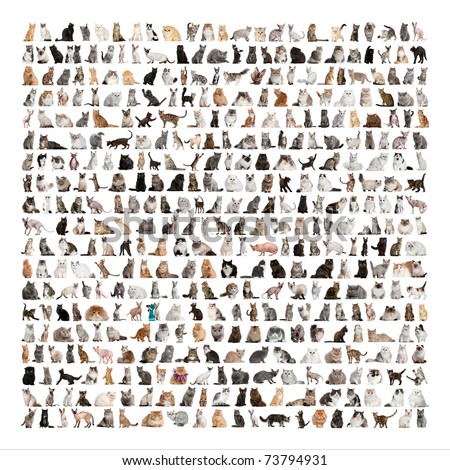 Large group of 471 cats breeds in front of a white background - stock