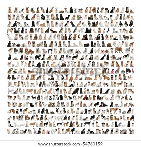 Large Group Of Dog Breeds In Front Of A White Background Stock Photo