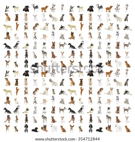 Large group of dog breeds, isolated on white