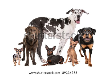 large group of dogs  in front of a white background - stock photo