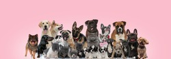 Large group of domestic animals posing wearing bowties while sitting, standing and laying down on pink background