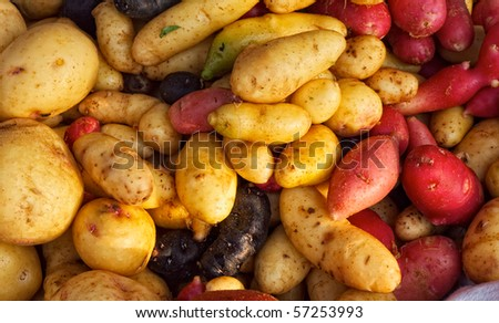 Large group of just dug potatoes at farm market