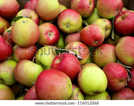Large group of just picked apples at farm market
