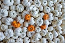 Large Group of Mini White Pumpkins With a Scattered Mini Orange Pumpkins on Top.