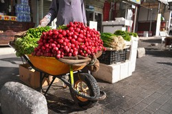 Large heap of fresh radish vegetable displayed on street in wheelbarrow - fruit and vegetables are usually sold on streets at Jordan