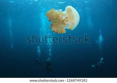 Large Jellyfish and scuba divers  #1268749183