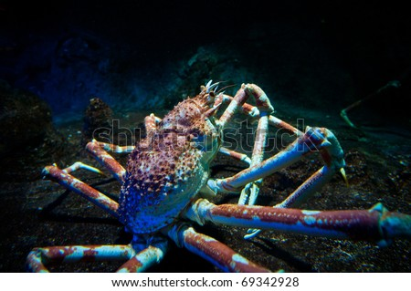 Large King Crab live in deep water (Paralithodes camtschaticus) - stock photo
