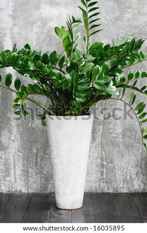 Large leafy plant in a modern concrete pot.