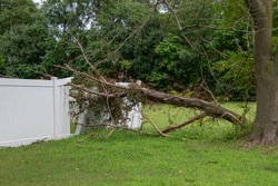 Large limb that fell off a tree destroying part of a white metal fence leaving a hole