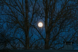 Large moon through the branches of trees.