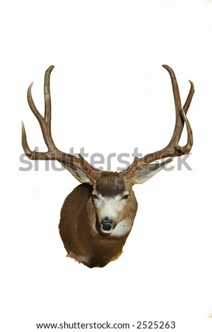 Large Mule deer Taxidermy mount - stock photo