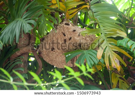 Large nest of wasps hangs over on a tree branch