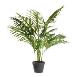 Large ornamental plant in a pot.  Exotic plants for the interior.