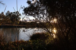 Large overland powerlines with the sun setting in the background and small golden clouds against a blue sky. Suburban wetlands lake and foliage in the foreground with reflections of the sun.