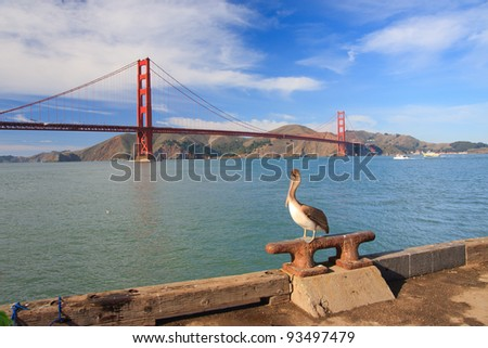 Large pelican and Golden Gate Bridge in distance
