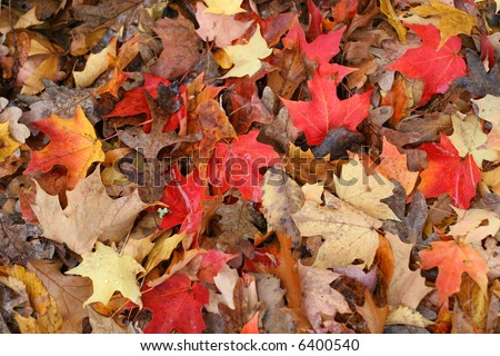 large pile of autumn leaves