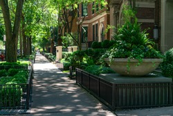 Large Potted Plant and Sidewalk in front of Old Homes in the Gold Coast Neighborhood of Chicago
