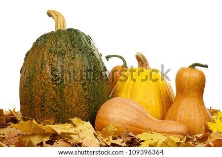 Large pumpkin surrounded by leaves and small pumpkins on a white background