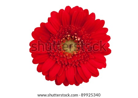 Large red flower with petals of orange gerbera on a white background
