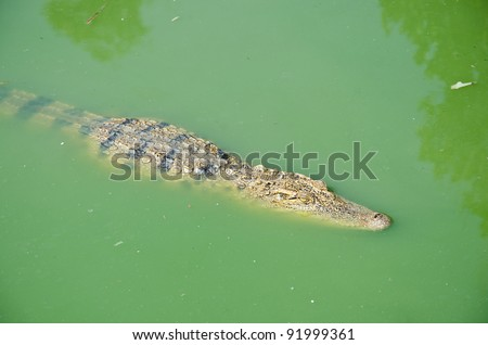 Large reptiles. Forest habitat along the water. - stock photo