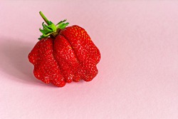 Large ripe strawberries on a pink background. Ugly fruits, berries