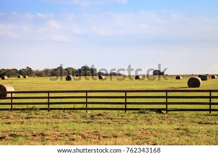 Large rolled hay bales sit in an open field for livestock in Texas. #762343168