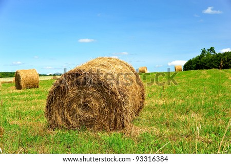 Large rolls of hay laying on a large fertile farmland in upstate new york waiting for winter storage on a gorgeous blue sky day