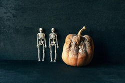 Large rotten moldy pumpkin and two skeletons on a black background. The concept for Halloween.