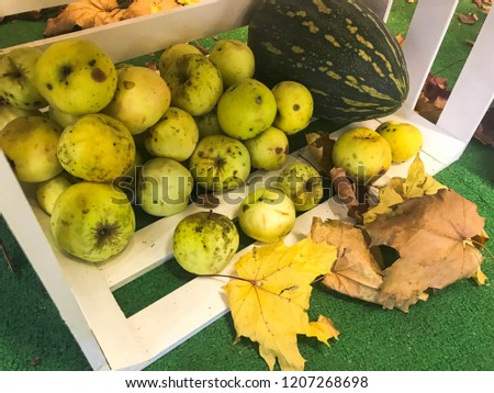 Large round juicy ripe green apples in a wooden box scattered on the floor and dry fallen yellow fallen leaves. #1207268698