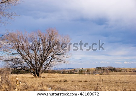 Large rural home seen in the distance across a golden field watched over by a bare tree with feathery branches, on the Colorado prairie